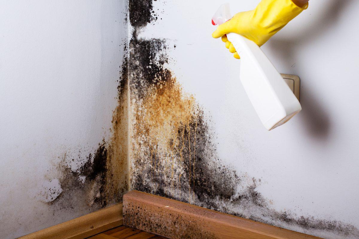 Contaminated walls